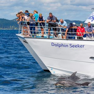 Hole in Rock Cruise Dolphin Watching
